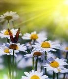 De mooie zonnige dag van de tuinscène Stock Foto's