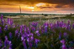 De mooie zonsondergang is in het gebied, de wilde bloemen en het gras, het zonlicht en de donkere wolken Royalty-vrije Stock Fotografie