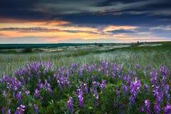 De mooie zonsondergang is in het gebied, de wilde bloemen en het gras, het zonlicht en de donkere wolken Royalty-vrije Stock Foto
