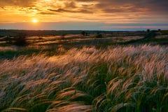 De mooie zonsondergang is in het gebied, de wilde bloemen en het gras, het zonlicht en de donkere wolken Stock Fotografie