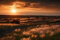 De mooie zonsondergang is in het gebied, de wilde bloemen en het gras, het zonlicht en de donkere wolken Stock Foto's