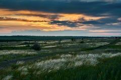 De mooie zonsondergang is in het gebied, de wilde bloemen en het gras, het zonlicht en de donkere wolken Royalty-vrije Stock Foto's