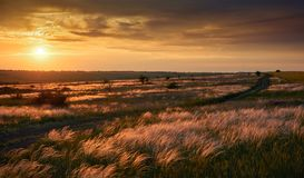 De mooie zonsondergang is in het gebied, de wilde bloemen en het gras, het zonlicht en de donkere wolken Royalty-vrije Stock Afbeeldingen