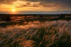 De mooie zonsondergang is in het gebied, de wilde bloemen en het gras, het zonlicht en de donkere wolken Stock Afbeeldingen