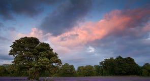 De mooie zonsondergang van de Zomer over lavendelgebied Stock Afbeeldingen