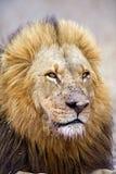 De Moordenaar van buffels Royalty-vrije Stock Foto's