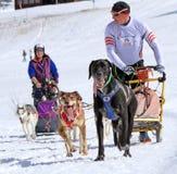 De internationale honden van de rasslee, Mossen, Zwitserland Royalty-vrije Stock Fotografie