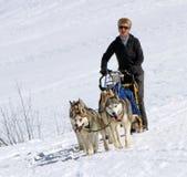 De internationale honden van de rasslee, Mossen, Zwitserland Royalty-vrije Stock Afbeeldingen