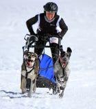 De internationale honden van de rasslee, Mossen, Zwitserland Stock Afbeeldingen