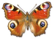De mot van de vlinder op een witte achtergrond Royalty-vrije Stock Afbeeldingen