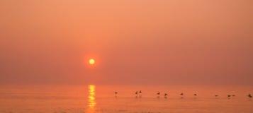 De Zonsondergang van de pelikaan royalty-vrije stock foto