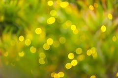 De motie vertroebelde, zachte nadruk op fireflies'flitsen in de tropische bomen op regenachtige nacht, zijn ondersoorten van Kl stock afbeelding