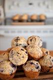 De muffin bakt met Bosbessen Stock Afbeelding