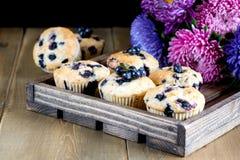 De muffin cupcakes met bosbessen op een houten dienblad Cupcakes verfraaide met bessen Horizontale foto Stock Afbeeldingen
