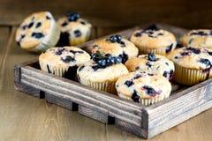 De muffin cupcakes met bosbessen op een houten dienblad Cupcakes verfraaide met bessen Horizontale foto Royalty-vrije Stock Foto