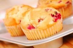 De muffins van de Amerikaanse veenbes in muffinpan Royalty-vrije Stock Afbeeldingen