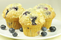 De muffins van de bosbes Royalty-vrije Stock Foto's