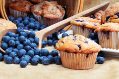 De Muffins van de bosbes Royalty-vrije Stock Foto