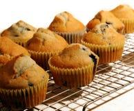 De Muffins van de bosbes Royalty-vrije Stock Fotografie
