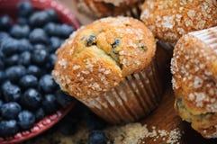 De Muffins van de bosbes Royalty-vrije Stock Afbeeldingen