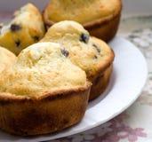 De Muffins van de bosbes Royalty-vrije Stock Afbeelding