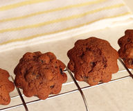 De muffins van de chocolade met rozijnen op een draadrek Royalty-vrije Stock Afbeelding