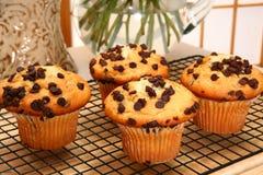 De Muffins van de Chocoladeschilfer royalty-vrije stock foto