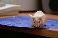 De muis bij de computer, op het muis-stootkussen stock fotografie