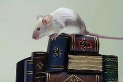 De muis op de stapel boeken. stock afbeeldingen