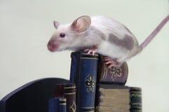 De muis op de stapel boeken. stock foto's
