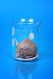 De muis van het laboratorium stock afbeelding
