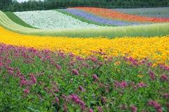 De multicoloured weg Stock Foto's
