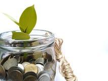De muntstukken groeien als bomen communiceren die investeren om geld te maken als een boom groeien stock afbeelding