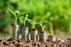 De muntstukken van de financiënstapel en de groene installatie op grond en aard backg Royalty-vrije Stock Foto's