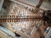 De MUSE is het Museum van de Wetenschappen van Trento Royalty-vrije Stock Fotografie