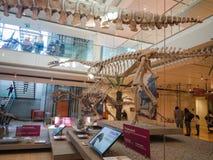 De MUSE is het Museum van de Wetenschappen van Trento Stock Foto's