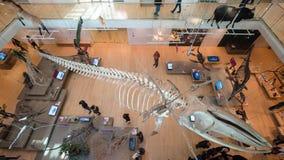 De MUSE is het Museum van de Wetenschappen van Trento Royalty-vrije Stock Foto