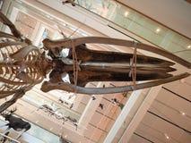 De MUSE is het Museum van de Wetenschappen van Trento Binnenlandse I Stock Afbeeldingen