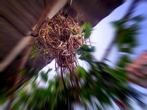 De mussen die vogels nestelen houden van op het dak van het huis te nestelen Stock Foto's
