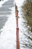 De mussen zitten op een omheining De sneeuwwinter royalty-vrije stock foto's