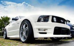 De Mustang Shelby van de doorwaadbare plaats Stock Foto