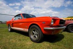 De Mustang van de doorwaadbare plaats Stock Fotografie