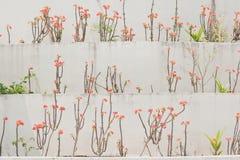 De muur bloeit achtergrond Stock Foto