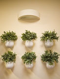De muur bloeit decoratie Stock Foto's