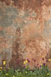 De muur en de tulpen van Grunge Royalty-vrije Stock Afbeelding