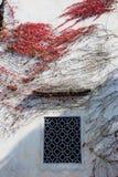 De muur met rode klimop, de Herfst wordt behandeld die stock fotografie