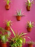 De Muur van cactussen Stock Foto