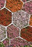 De muur van de bloem Royalty-vrije Stock Fotografie