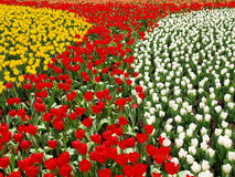 De Muur van de bloem Stock Afbeelding