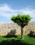 De muur van de boom en van de droge steen royalty-vrije stock foto